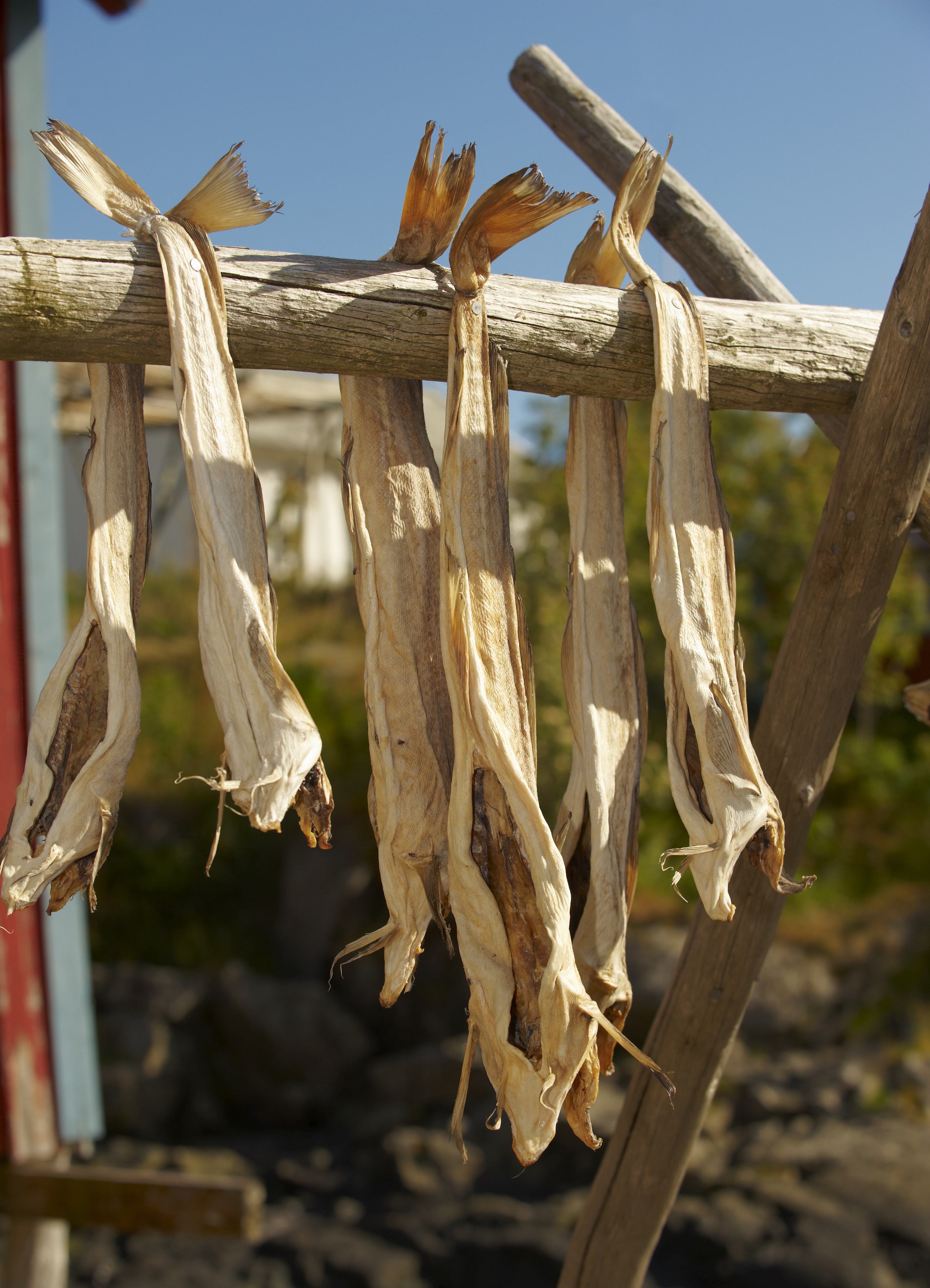 Dried cod and the island kings for Where to buy salted cod fish