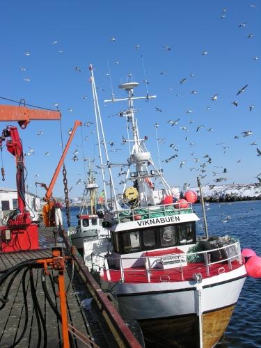 Rørvik fiskebåt - Foto Anne Grethe Walaunet
