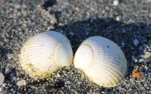 Kissing shells