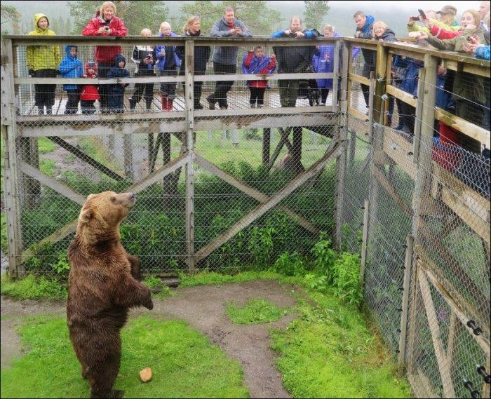 Namsskogan Familiepark Bjørn