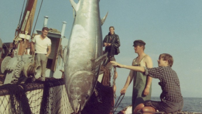 Alantic Bluefin Tuna Norway 1960s