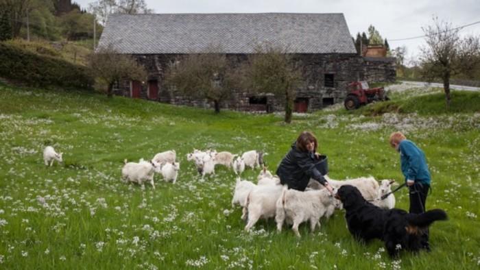 Stone Barn in Hodnesdal Norway
