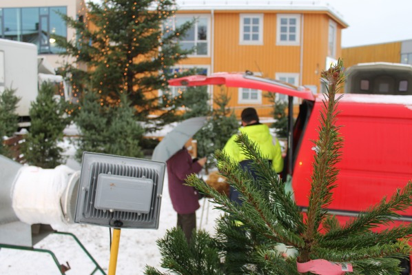 Christmas Tree Seller Norway 3