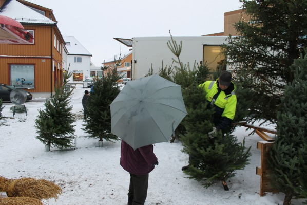 Christmas Tree Seller Norway