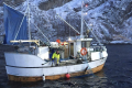 Cod Net Fishing Norway