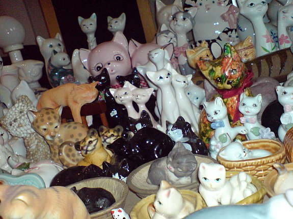 Eight hundred cats for sale