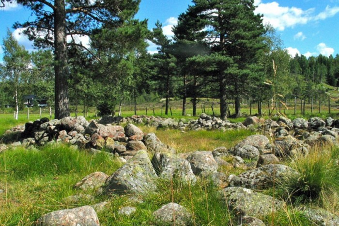 Cannabis Farm Viking Age Norway