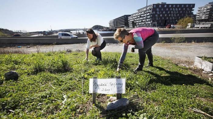 Losæter Urban Meadow Oslo