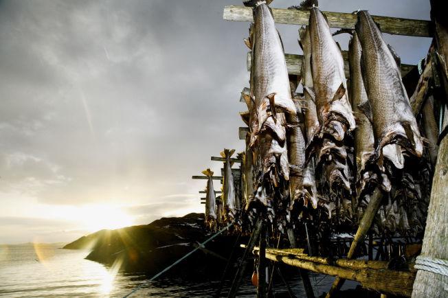 Stockfish from Lofoten Hjeller