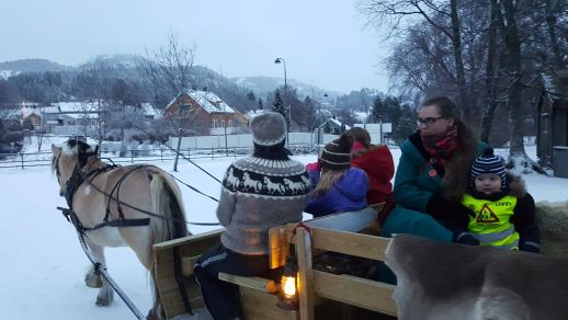 namsos-christmas-market-fjord-horse-and-carriage-rezise
